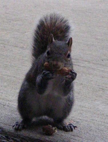 squirrel1129