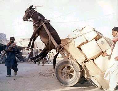 donkeywork