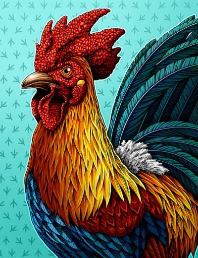 A Better Cock